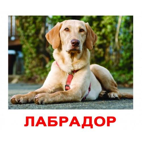 Породы собак Вундеркинд с пеленок